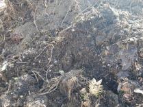 Boden organisch Kompostboden