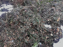 Laubentsorgung Rasenschnitt Häckselgutentsorgung