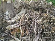 Stammholz Wurzelentsorgung Baumwurzelentsorgung
